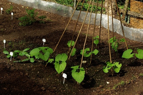 Using a Weed Mat in your Garden Beds