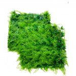 Ivy Leaf Artificial Hedge Tile (A038) 50 x 50 CM