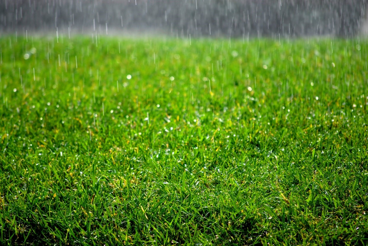 How To Keep Your Synthetic Grass Looking Great in the Rain?